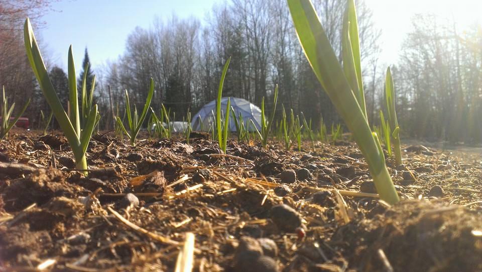 Garlic+Dome
